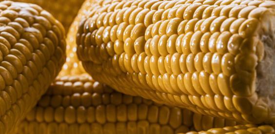 Pannocchie di mais tagliate